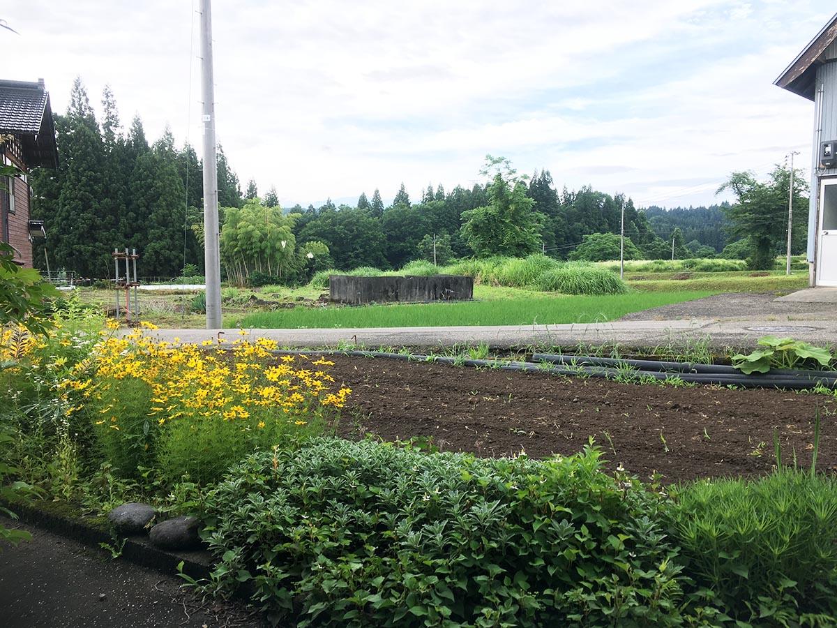 柳の家から見た畑