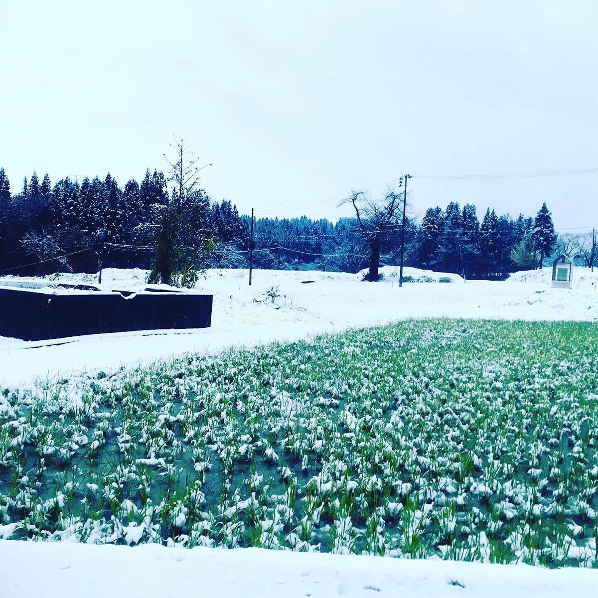 初雪の様子